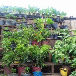 urban garden chidfea b
